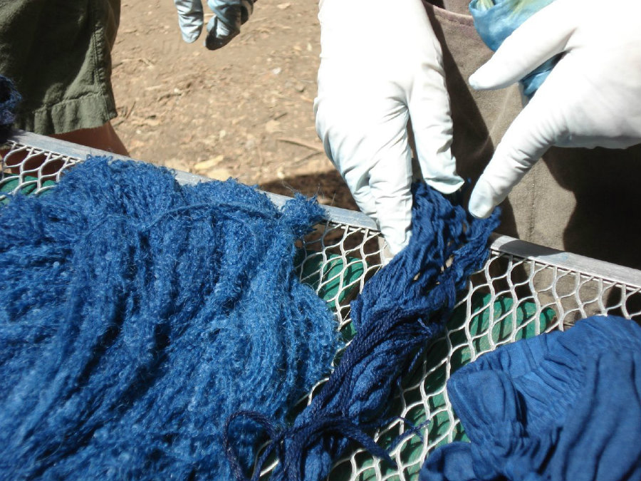 """Currently, the largest processor of indigo dye is India, as the """"I. tinctoria"""" plant species was successfully domesticated in the country. Photo credit: Learnnc.org"""