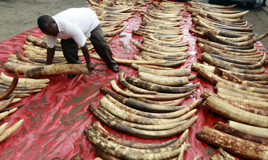 These southern African countries argue that they should be able to sell their ivory stock. Photo credit: Brookings