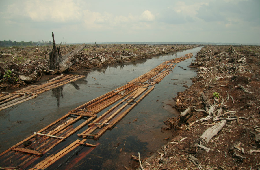 WWF manifested that some causes of the mass extinction are the destruction of their natural habitat, climate change, species overexploitation and food systems. Photo credit: Wikipedia