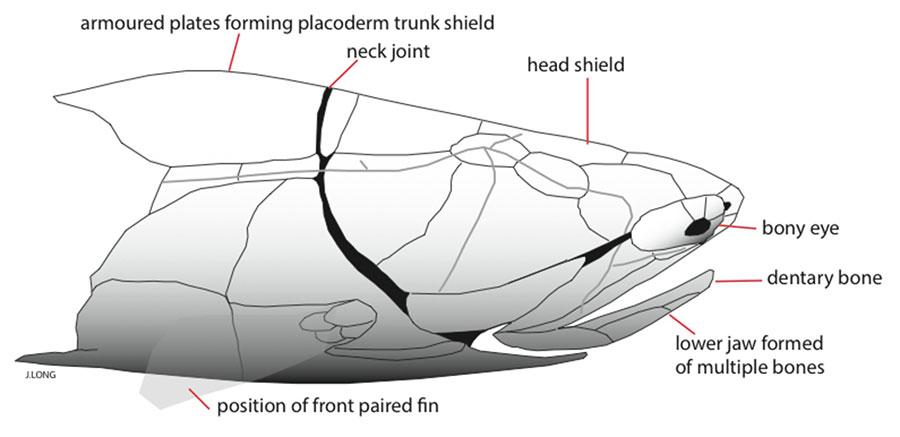 fish-fossil-evolution