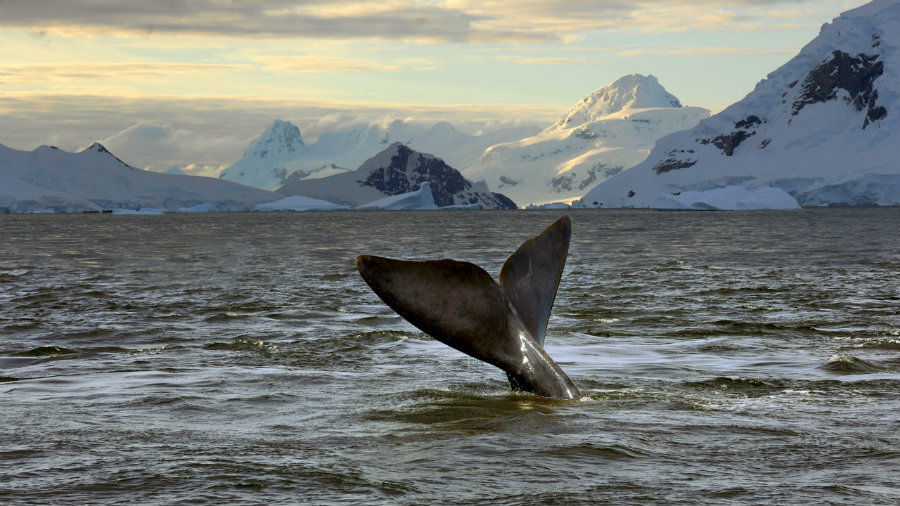 The CCAMLR established this week that the Ross Sea will become a Marine Protection Area. Photo credit: The Huffington Post