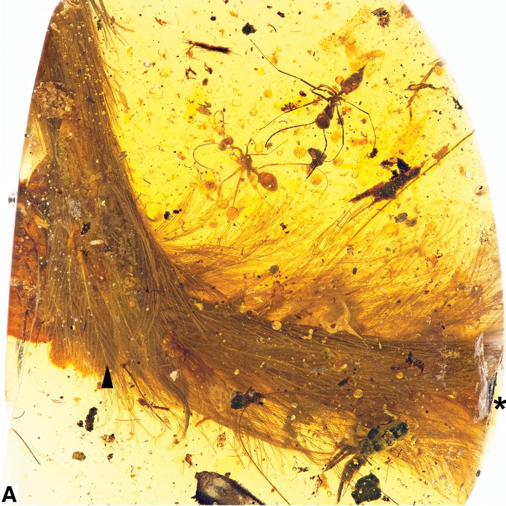 Dinosaur tail in amber