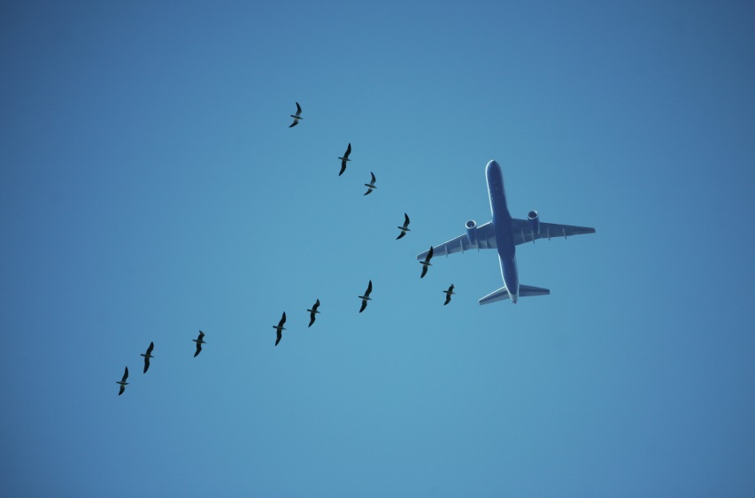 Birds and Airplane