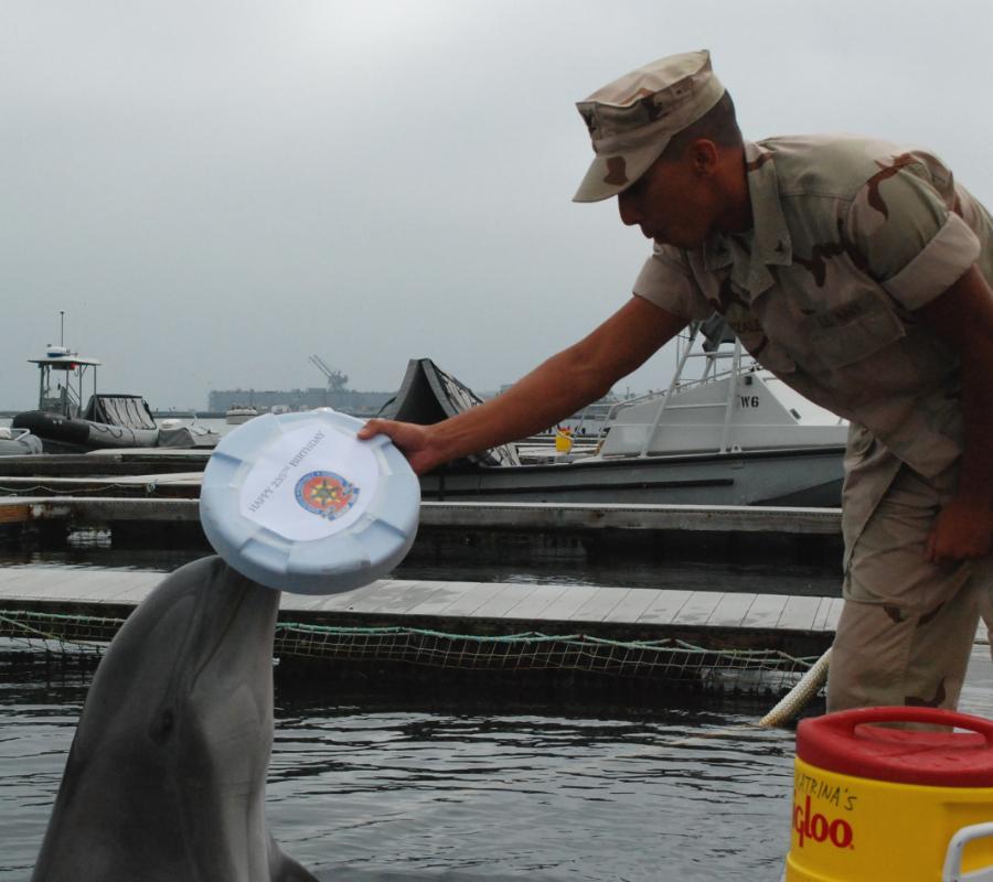 U.S. Navy's dolphin