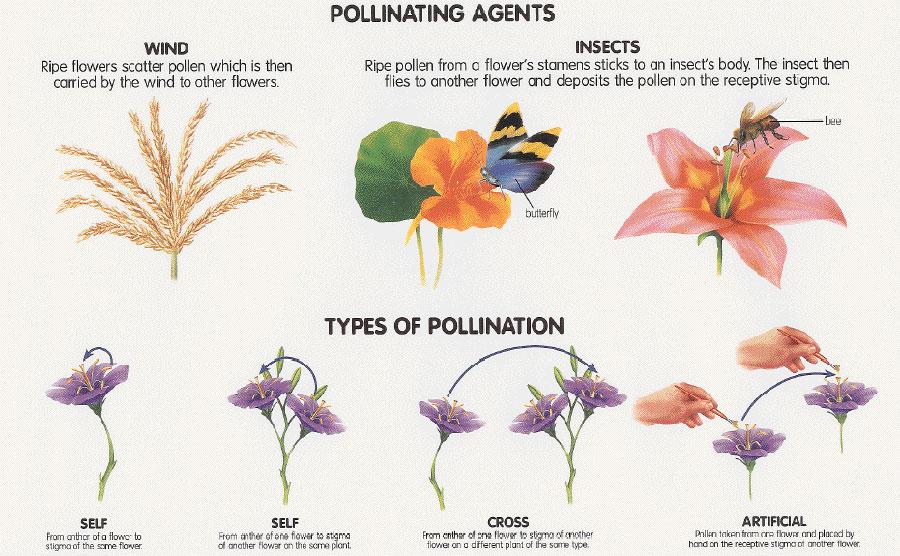pollination-chart
