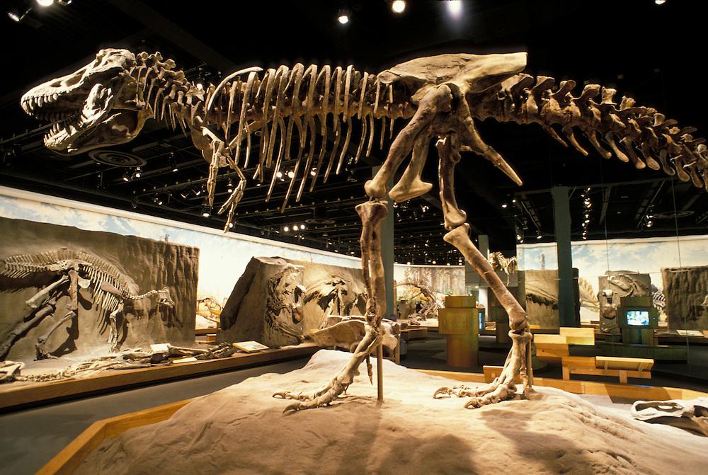 Dinosaur Fossil Display