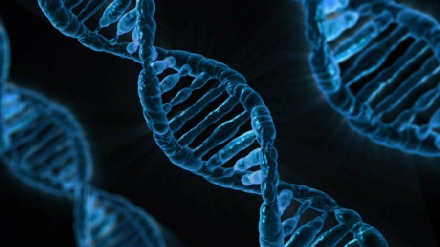 Study identifies Night Owl gene