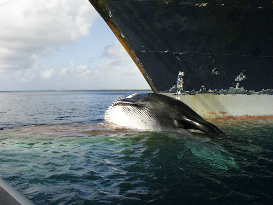 Image credit: International Whaling Commission