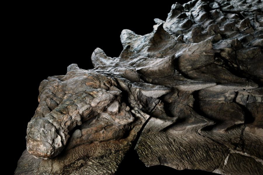 The world's best-preserved dinosaur