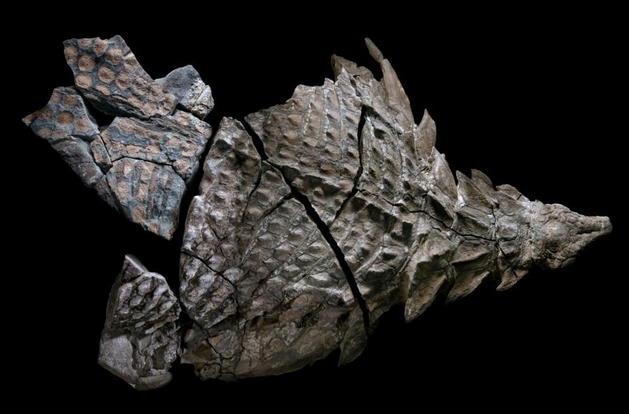 The world's best-preserved dinosaur
