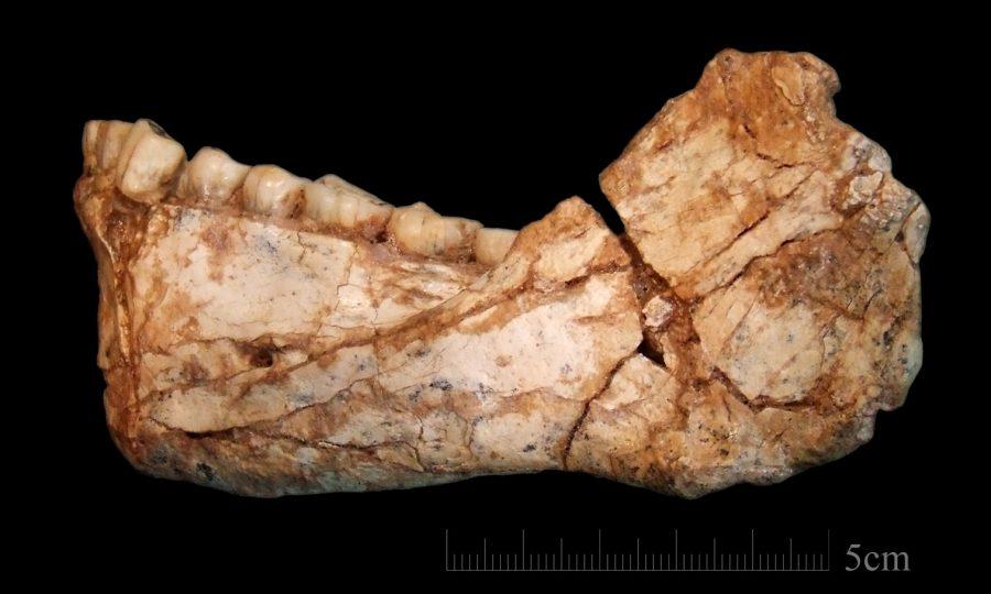 Homo Sapiens Fossil