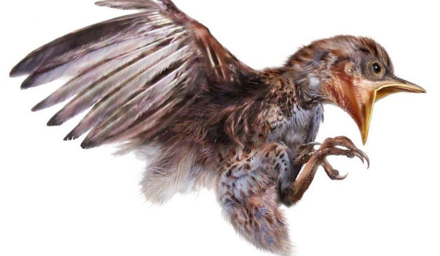 99 million-year-old bird