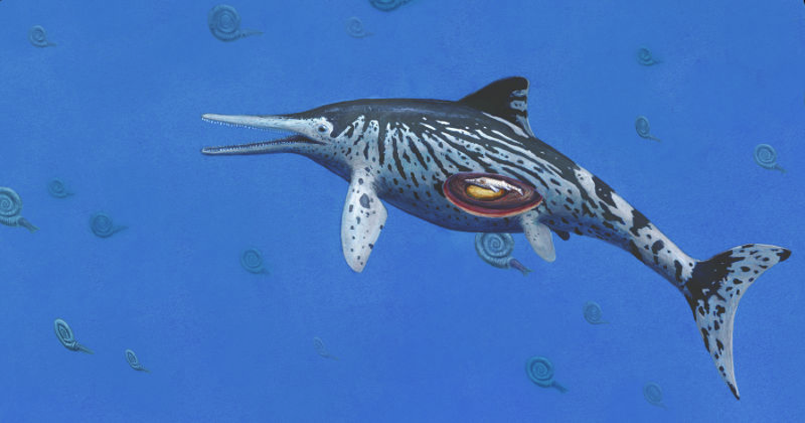 Rendition of an Icthyosaurus carrying a baby. Image Credit: Joschua Knuppe
