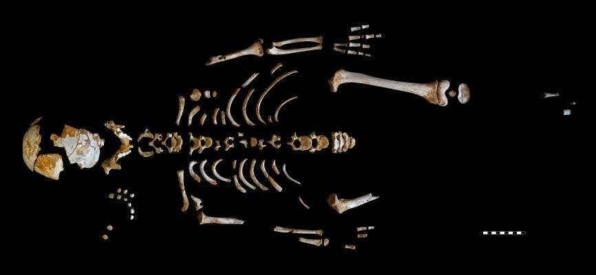 Skeleton of a Neanderthal boy unearthed in El Sidrón cave in Spain. Image credit: Paleoanthropology Group MNCN-CSIC