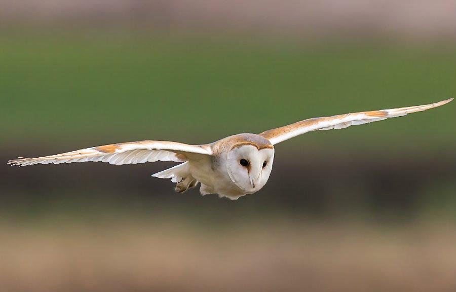 Image credit: Ecologysurveyors.co.uk