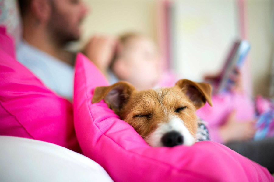 A new study found that sleeping with your dog at night time could improve the quality of your sleep. Image credit: Readers' Digest