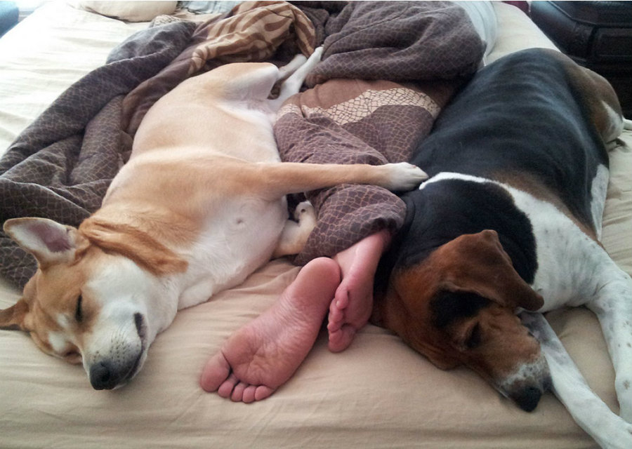 The new study found it is perfectly okay to sleep with dogs, as long as they don't sleep in your bed. Image credit: BarkPost
