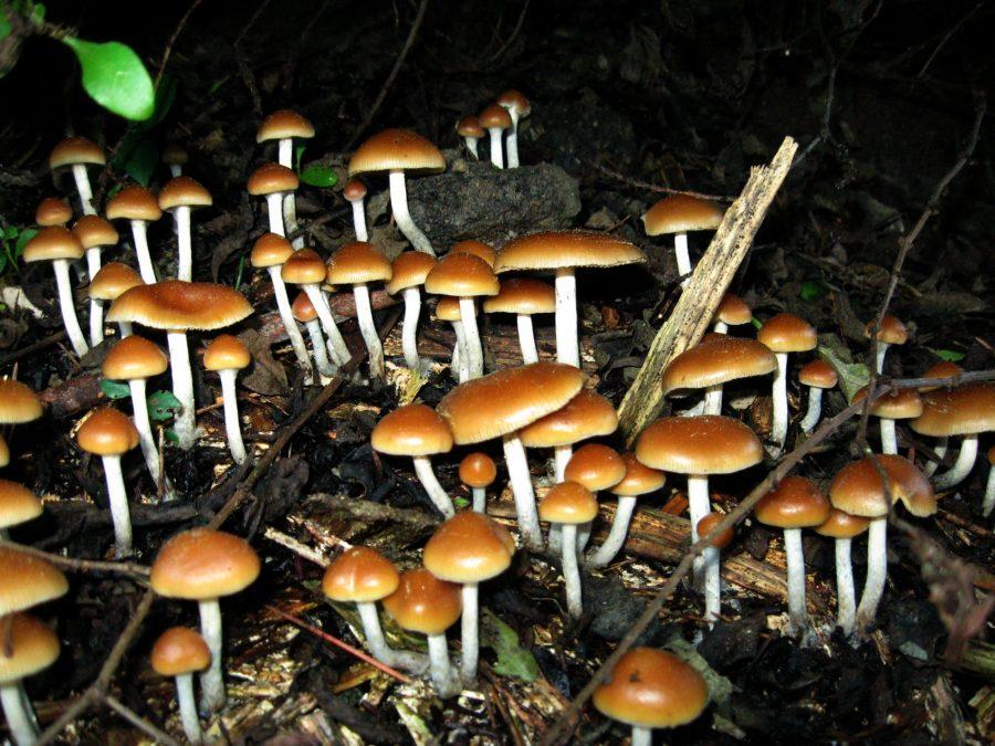 Magic mushrooms, Mushrooms depression treatment