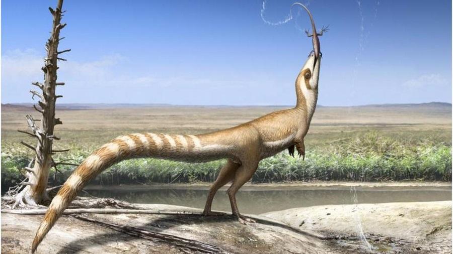 Feathered dinosaur, Dinosaur similar racoon, Sinosauropteryx camouflage