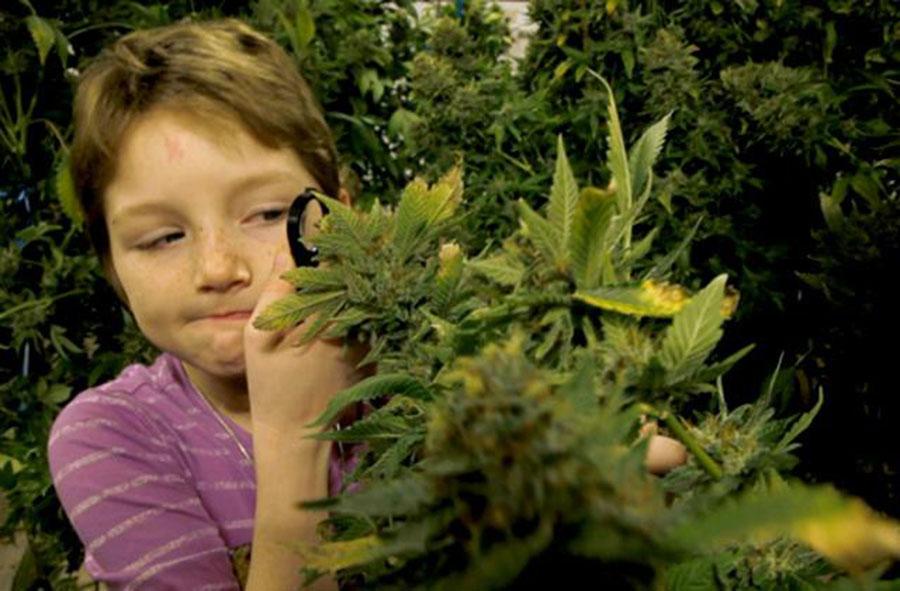 Marijuana overdose death, Kid dies marijuana overdose, Cannabis