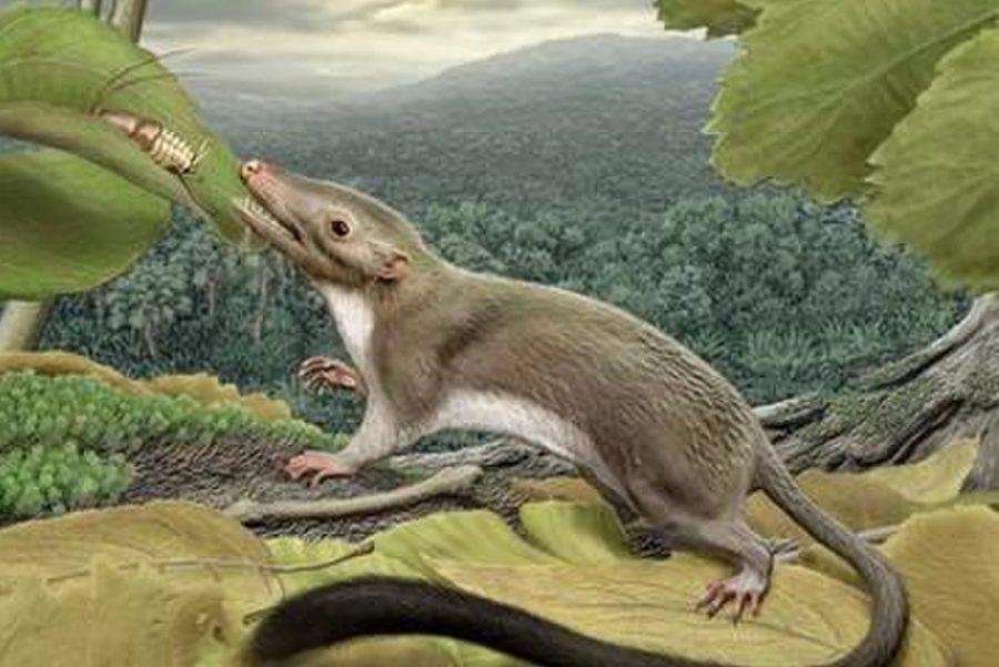 Mammals in Mesozoic, Mammals and dinousaurs, Mesozoic Era