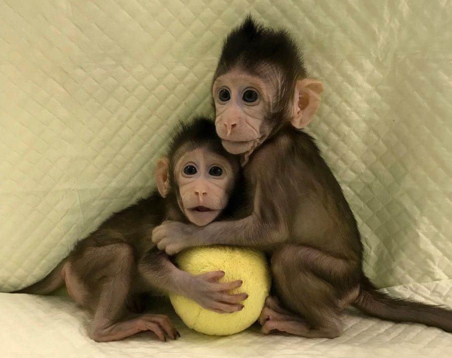 Zhong Zhong (ZZ) and Hua Hua (HH), Zhong Zhong and Hua Hua, Cloned monkeys from China