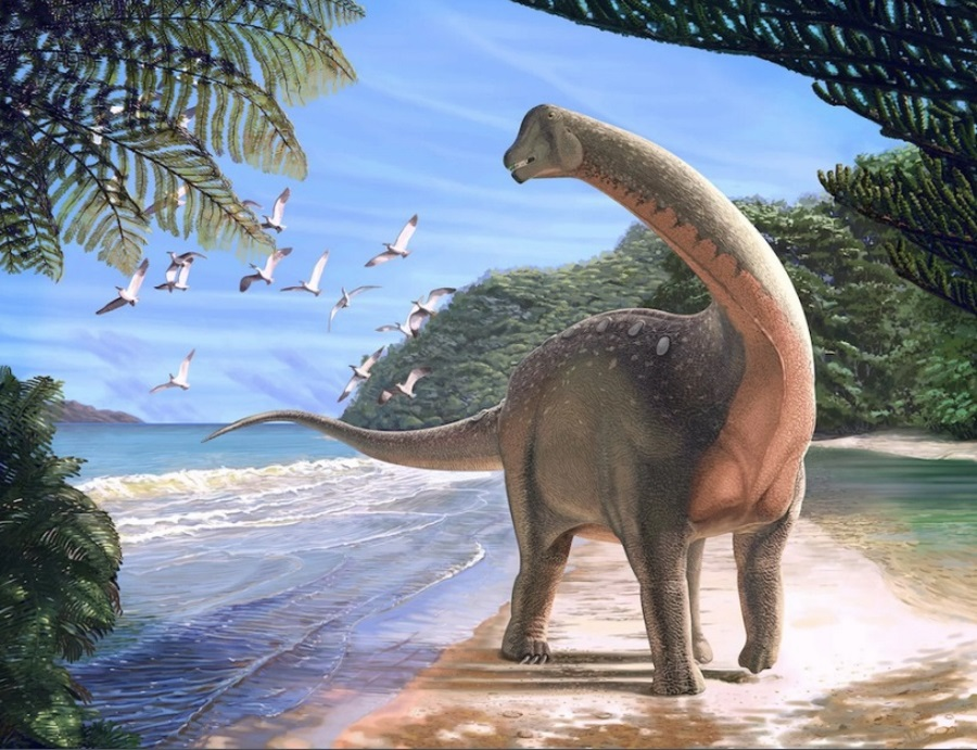 Mansourasaurus shahinae, Mansoura University, Dinosaur fossil in Egypt, New dinosaur species, Titanosaur