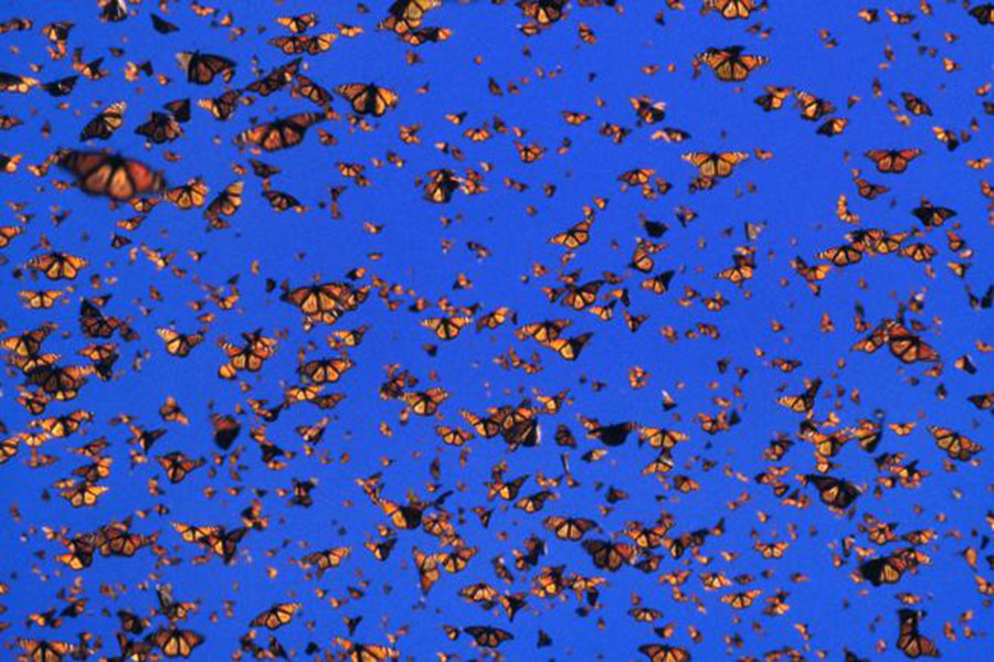 Butterflies and moths lived earlier, 200 million years ago, Flowers