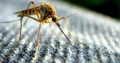 Teaching mosquitoes by swatting at them, Mosquitoes learning by human odor, Understanding mosquitoes' behavior