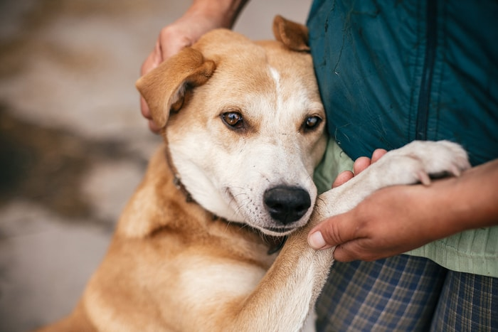 Mistakes to Avoid as a Dog Owner