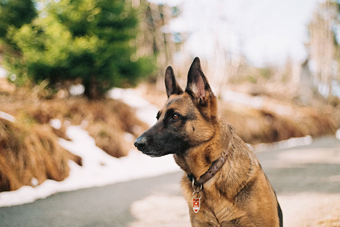 How to Qualify for a Service Dog: A Detailed Guide