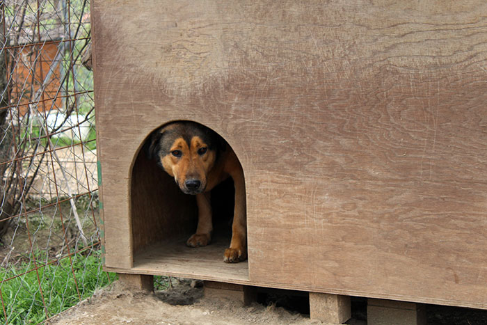 How To Choose The Right Kennel Size For Your Dog