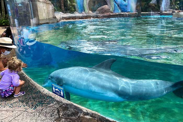 Electric Ocean Festivities Are Back at SeaWorld Orlando
