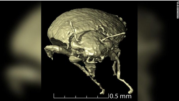 230-Million-Year-Old Undocumented Beetle Species Found In Fossilized Dinosaur Poop